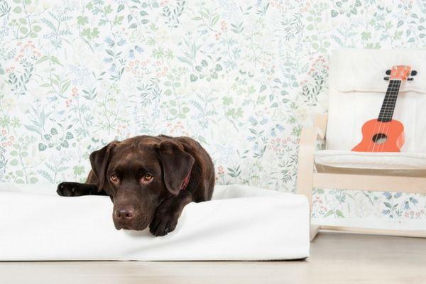bidbädd - den bästa hundbädden