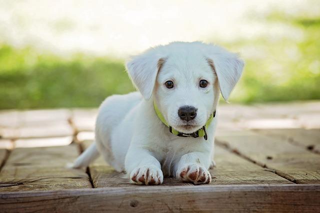 Hur avmaskar man en hundvalp?