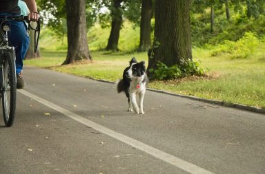 Ta med hunden på cykeltur