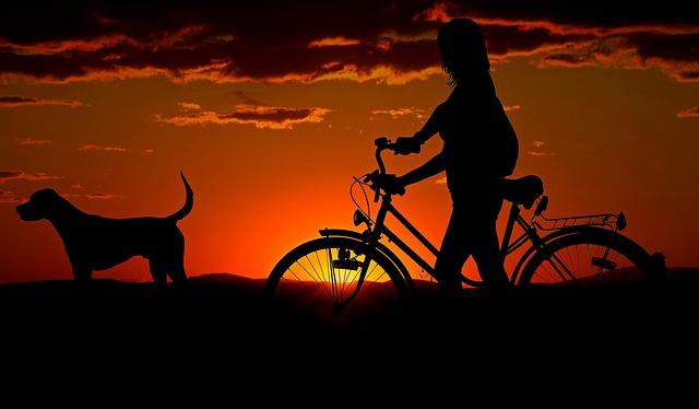 cykla med hund är perfekt hundträning