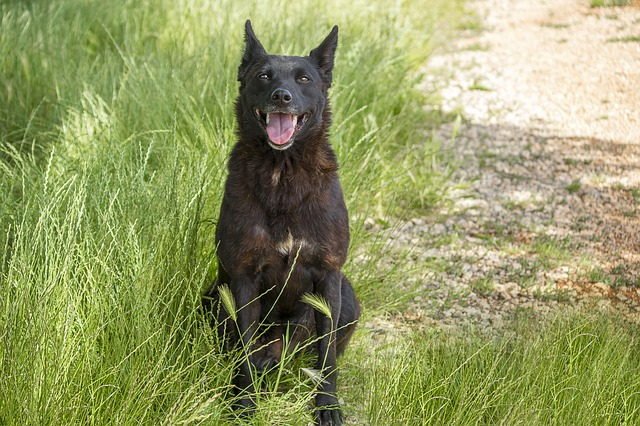Hund utan borrelia