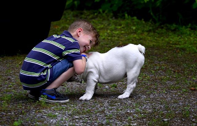 Hund kram