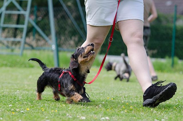 Hundträning tax