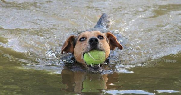 Hund i vatten utvald