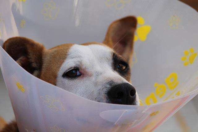 Hund med halskrage
