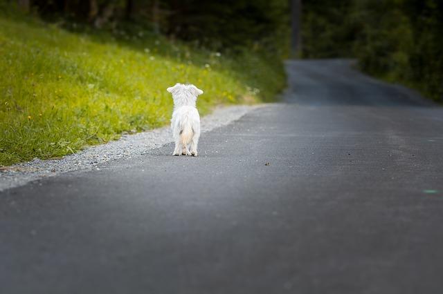 Lös hund