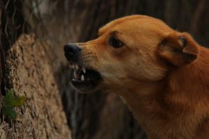 Arg hund