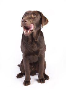Hund som slickar sig runt munnen