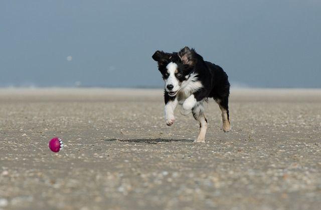 Hund springer på stranden